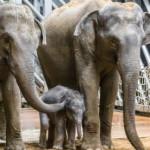Зоопарк в Праге: особенности, как добраться, фото и цены