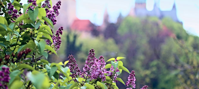 Прага в мае: особенности погоды, как одеваться, экскурсии, что посмотреть и куда сходить